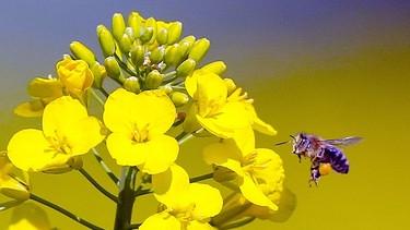 bilder von bienen