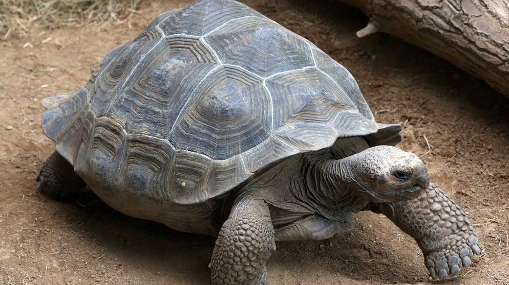 Die Clevere Schildkröte über Die Intelligenz Von Kaltblütern Iq