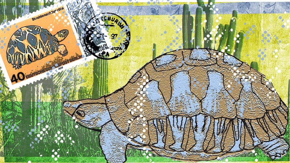 19 Mai 1965 Schildkröte Tui Malila Stirbt Mit 188 Jahren Das