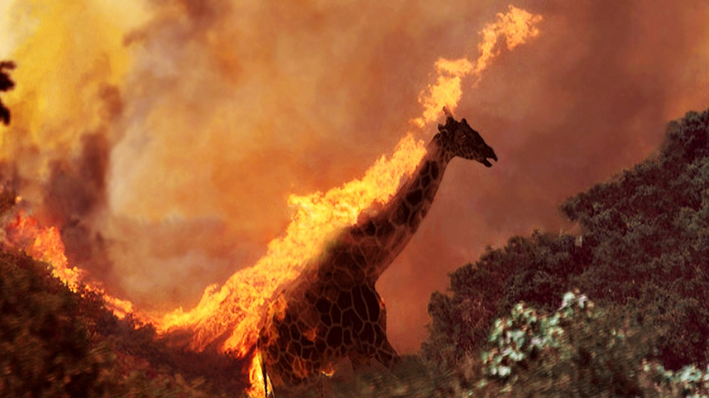 Western Wildfires, photo provided by the Santa Barbara County Fire Department, 2017; Silhouette of a Giraffe, Kenya | Bild: picture-alliance/dpa/AP Photo/Santa Barbara County Fire Department; picture-alliance/dpa/Design Pics/Ian Cumming; (Montage BR /Claudia Eichhorn)