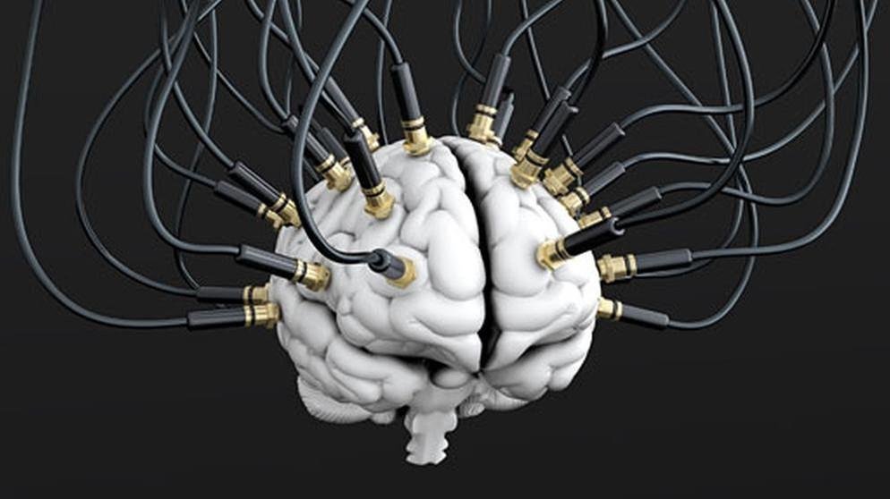 Das Gehirn: Schaltzentrale des Körpers | Mensch, Natur und Umwelt ...