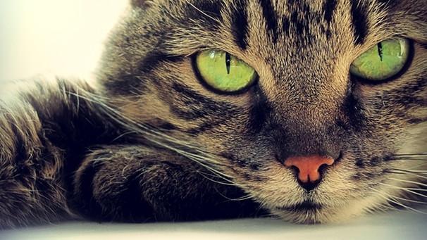 Katze muss nicht vor Gericht