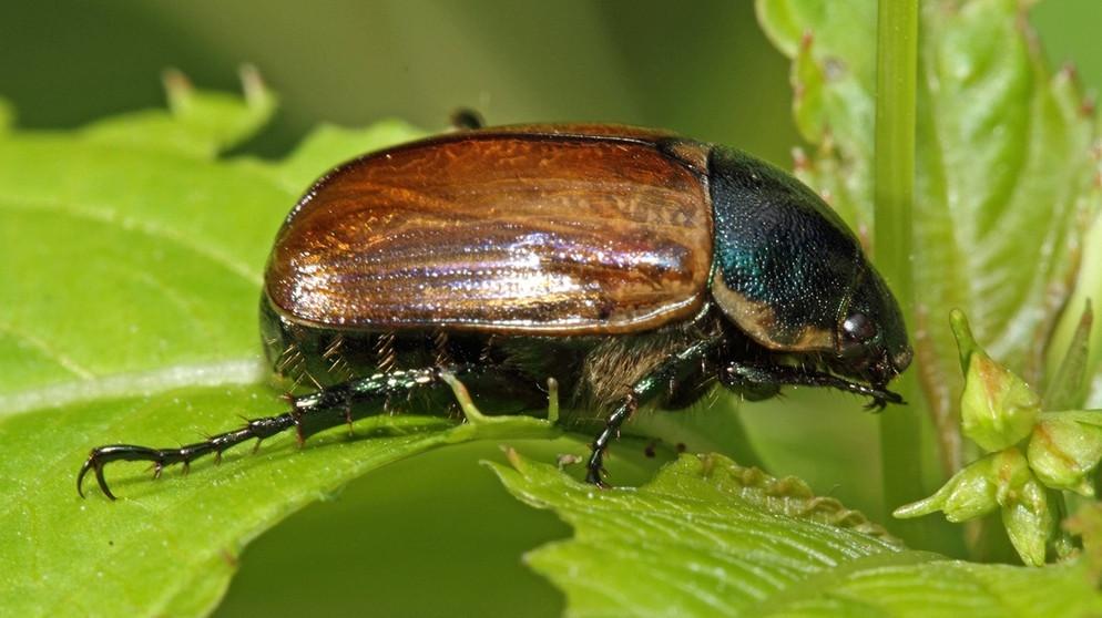 k fer warum die insekten bedroht sind wissen themen. Black Bedroom Furniture Sets. Home Design Ideas