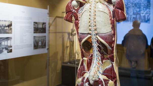 Die Wirbelsäule: Ein Korsett für den Rücken - Bänder und Muskeln ...