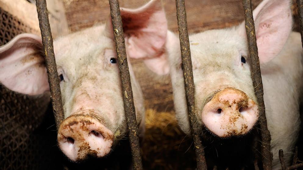 Macht euch die Tiere untertan?: Von der Domestikation zur Massenproduktion