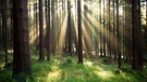 Wald in Franken | Bild: picture-alliance/dpa