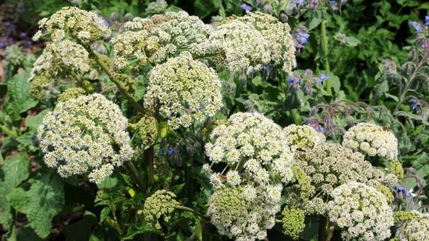 Schattenblumen Diese Pflanzen Mögen Schattige Plätze Bayern 1