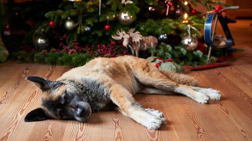 hund unterm christbaum tiere zu weihnachten nur im. Black Bedroom Furniture Sets. Home Design Ideas