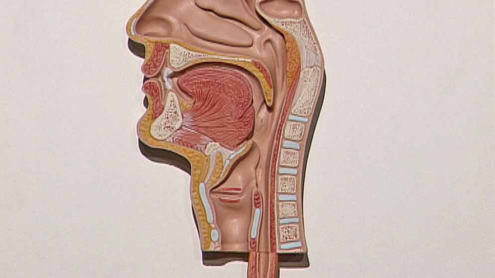 Der Weg der Nahrung: 2. Mund und Speiseröhre | Biologie | Telekolleg ...