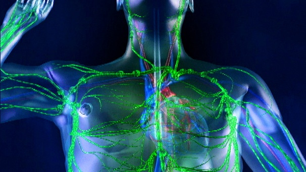 Telekolleg Biologie - 7. Folge: Das Immunsystem   Biologie ...