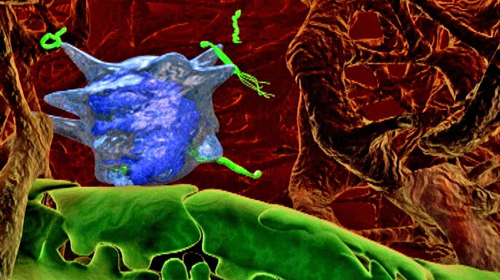 online the end of modern medicine biomedical