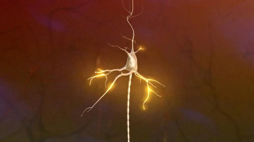 Biologie - 2. Nervensystem: Nervenzelle - Aufbau und Funktion ...