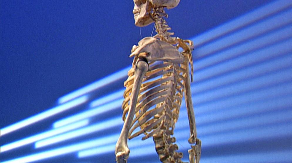 Tolle Menschliche Wirbelsäule Skelett Fotos - Menschliche Anatomie ...