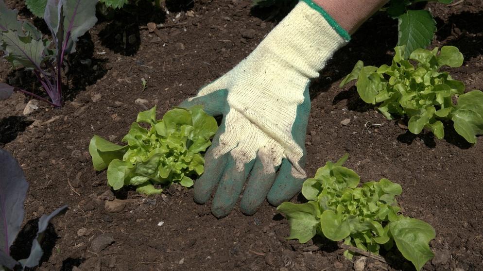Berühmt Kompost: Der beste Dünger | Themen | BR.de @SO_25
