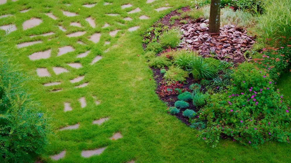 Blumenwiese Anlegen geschmacksfrage rasen oder blumenwiese themen br de