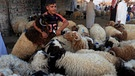 A boy poses for a photo between sheep at a livestock market during the Eid al-Adha festival in Najaf south of Baghdad | Bild: Reuters (RNSP)/Alaa Al-Marjani