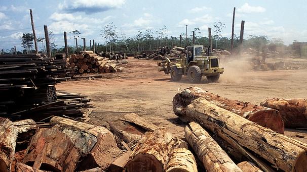 Symbolbild: Abgeholzte Gebiete des Amazonas | Bild: picture-alliance/dpa