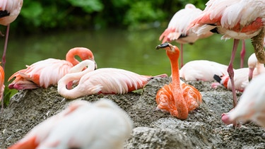 Flamingos im Zoo | Bild: picture-alliance/dpa